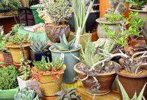 planten creatief