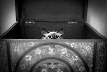 Adorable Animals / by Jessi Heinowski