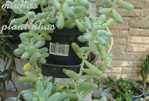 Plants / Lindas