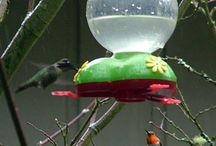 Humming Birds / by Ashlea Targett