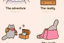 kitten adventures