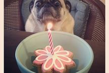 But I want to eat it not blow out the candle / Ok how old am i