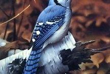 Birds (Pájaros)