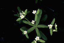 Missouri Wildflowers, Research
