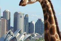 Sydney / by John Nugent