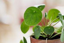 Grønn planter