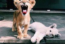 Zwierzaczki