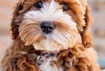 Dogs beautiful