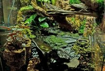 Inspirational amphibian habitats / Beautiful viv & terrarium builds