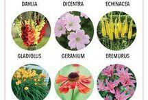 flowers for Butterflies