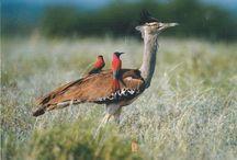 Postcrossing: Birds / Ontvangen Postcrossing-kaarten van vogels