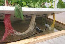 Hydroponics Aeroponics Aquaponics  / #hydroponics #Aeroponics #aquaponics