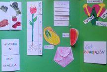 Plantas infantil y primaria