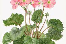 pastela akwarela  kwiaty