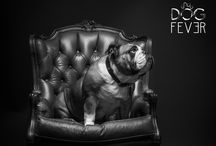 Photo Party / Dog Fever Events