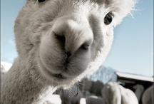 Animals / Adorable, fun & crazy animals