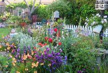 PLANTS/FLOWERS  GARDENS