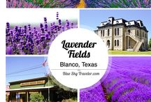 Southern Travel: Texas