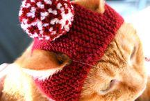 gato ropa