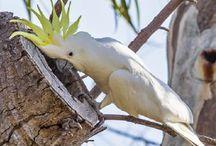 Maladies et soins / Maladies et comment prendre soin de nos oiseaux!
