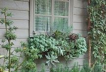 Wonderful Window Boxes