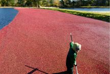 Ocean Spray Harvest