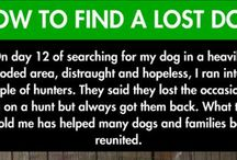 Finding a Lost Dog / Your dog is lost and you are frantic and wondering what to do.  Use these ideas to help you put together a plan of action.  Get busy because the sooner you start, the more likely it is that your dog will be returned without injuries.  And remember to ask for help.