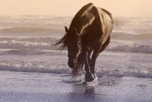 Beach horses / by Debi Heppner