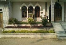 Garden on Concrete
