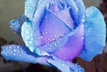 Blue Roses / by Fawn Beeley