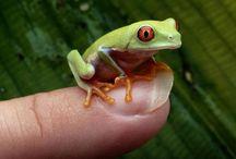 I like Frogs