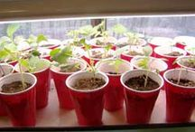 Growing my Own...