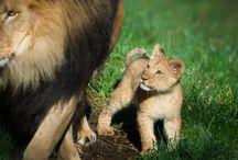awsome animals photography