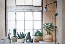 vensterbank idee en planten
