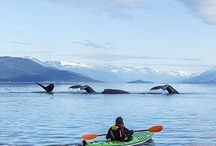 Sites to see on our Alaskan honeymoon / Exciting and beautiful places to go when in Alaska