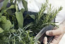 –herbs