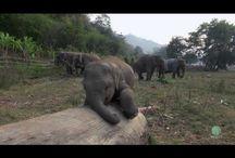Elephants / by Meg