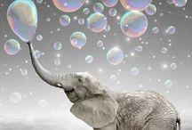 ELEPHANTS / by Aƞƞⅇ M@rⅈe