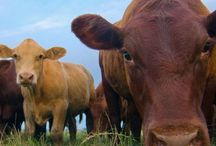 •• Sustainable Food Articles: Organics, Grass Fed, Pasture Raised, Non GMO •• / Articles and posts to help ensure you're informed on the quality of the food that you eat. Posts on sustainability, organics, grass fed meat, pasture raised animals, non GMO food and more! No recipes, No ads, no sponsored posts. No more than 2 pins per day. Wait at least 1 month for repeat pins. To join this group board, fill out this form: https://goo.gl/forms/Db2rtjWFWmAgOXO83