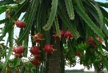 Oblíbené a zajímavé rostliny