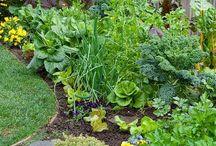 Вегетарианские сады