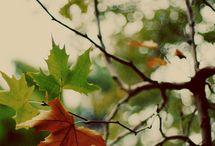Fall / by Jen Taylor