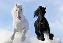 color: Black & White