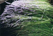 flowericius
