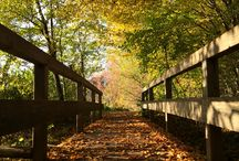 Herbst / Der schöne Herbst
