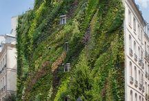Patric Blanc & vertical garden