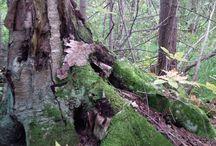 Nature trail project / Trail blazing Natural wood arbours Bridges