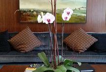 Orchids / Bergen Botanicals Orchids on display