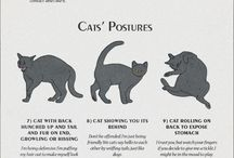 Cat behaviour