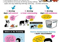 Training Tips / Short tips on how to make the bond between you and your dog stronger.